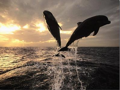 photo1 dolphin